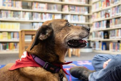 photo of therapy dog in library