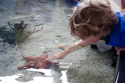 photo of a child touching a starfish